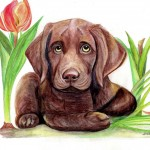 Puppy, Dog, pet, Animal, labrador, and canine