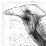 raven, bird, foreign language, words, charcoal, and Drawing