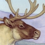 Animals, caribou, Migration, Wildlife, and mountians