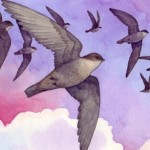 Animals, birds, Migration, chimney swifts, flight, and clouds