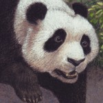 panda, earthquake, disaster, Nature, and fright