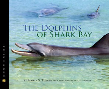 dolphins of shark bay_hres