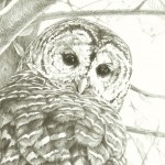 realistic, barred, owl, arbutus, and bird