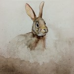 Bunny, rabbit, Nature, Animals, woods, and forest