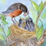robin, eggs, nest, tree, Mom, feeding, spring, worm, and baby