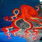 octopus, sea creatures, and mollusks