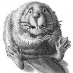 beavers, animal, middle grade, and chapter book