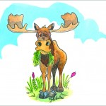 moose and Nature