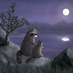 raccoon, night time, and Full Moon