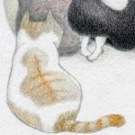 pencil, Colored pencil, animal, and #cat