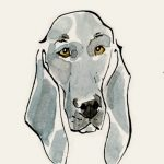 dogs, Pets,   pen and ink, and Watercolor
