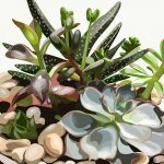 succulent and plant