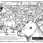 Grand Canyon National Park, elk, Adult Coloring Book, and coloring pages