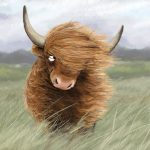 cattle, cow, scottish Highlands, and wind