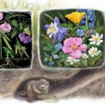 plants and animal relationships