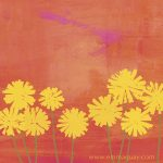 dandelion, dandelions, endpapers,   flowers, flower, sunset, petals,   colour, and  colorful