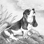 basset hound dog, beach, and dogs