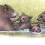 baby bears, Bears Habitat, Environmental Protection of Bears, Children's Nature Picture Book, baby animals, and baby and mother