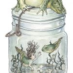 frog, Magic, whimsy, whimsical, fairy tale, tadpole, and Underwater Scene