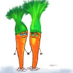 vegetable, Fruits and Vegetables, Carrots, #Friendship, and   love