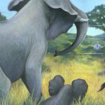 Elephants, Animal illustrations for a South African Children's book, wildlife conservation, poaching, acrylic, and Baby Elephant