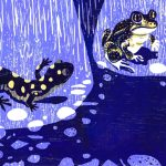 salamanders, Frogs, spotted salamander, and Science and nature
