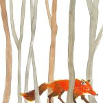 fox and in the woods