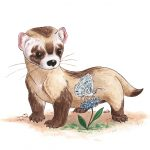 ferrets, baby animal,  cute, curious, butterfly, and friends