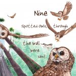 Nature-Owls, endangered animals, animals / counting, redwoods, Forest Animal, flying, birds, and Animal Habitat