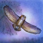Environment/Nature, Great Horned Owl, Children's Nature Picture Book, nature, and nature wildlife