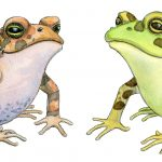 frog, toad, nature, animals, and biology